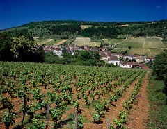 Burgundy Tour with Rose Murray Brown MW